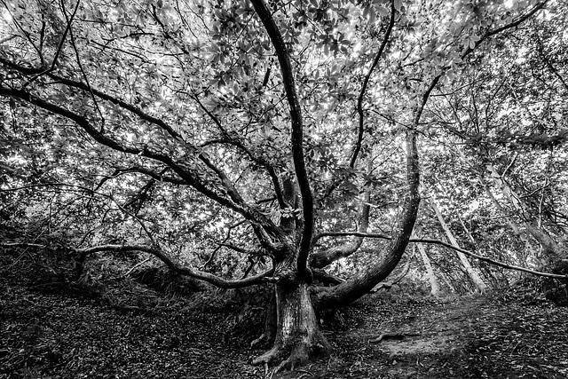 La forêt enchantée... L'esprit des bois 28-mei10
