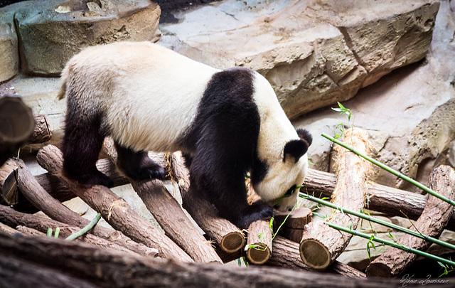 Zoo de Beauval 2_111
