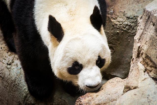 Zoo de Beauval 2_211