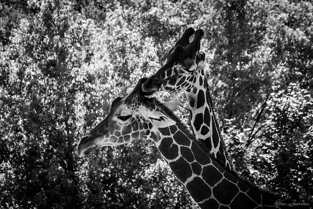 Zoo de Beauval - Page 2 3_110