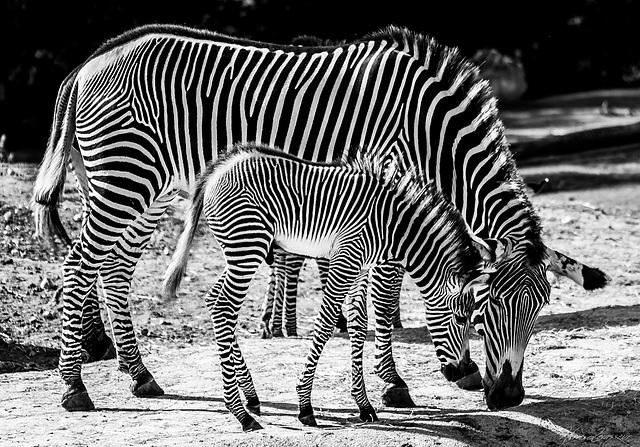 Zoo de Beauval - Page 2 3_210