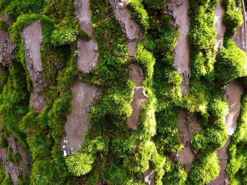 mousses et lichens [verrouillé] - Page 2 7-dhee10