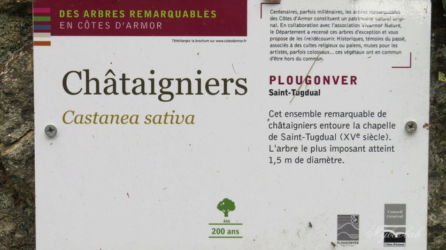 Arbres remarquables - Page 4 814