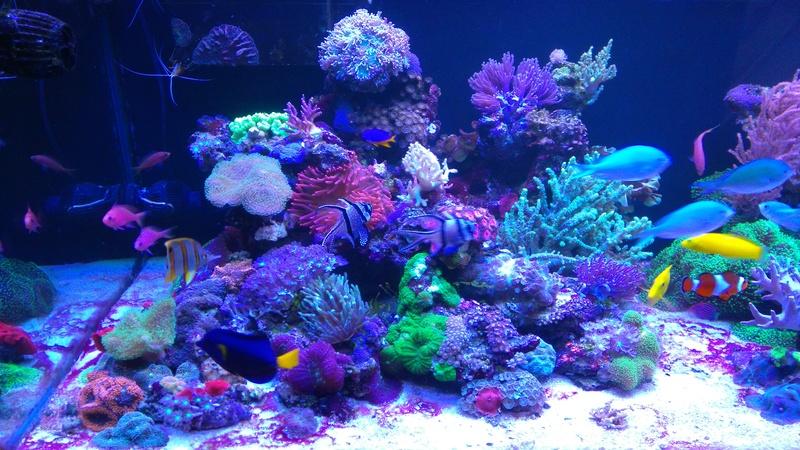 karlito's reef 3  - Page 19 Dsc_2310