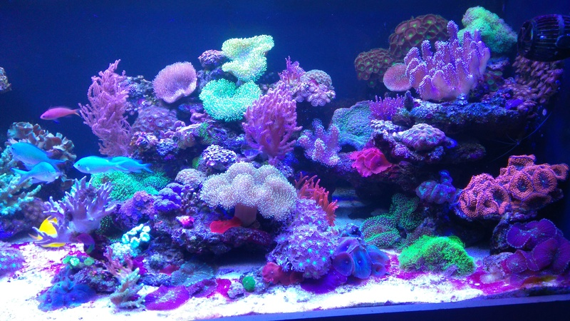 karlito's reef 3  - Page 19 Dsc_2311