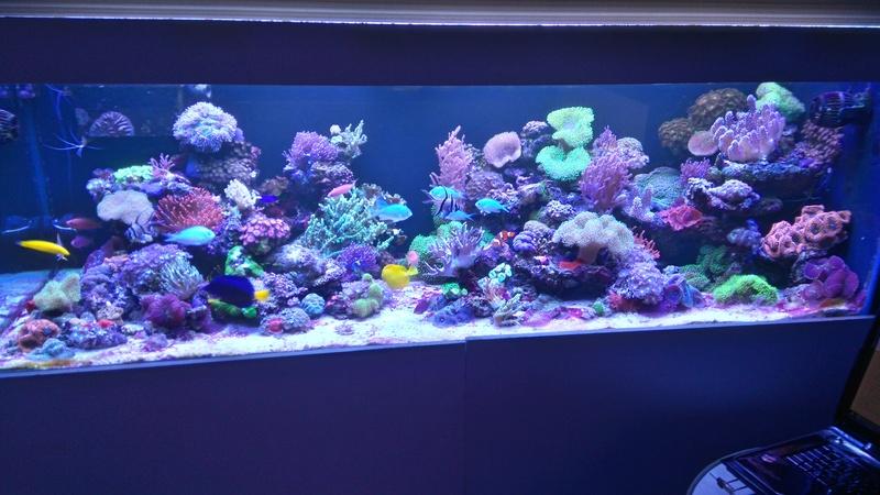 karlito's reef 3  - Page 19 Dsc_2312