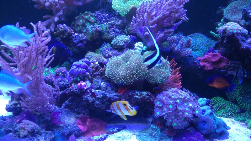 karlito's reef 3  - Page 20 Dsc_2410