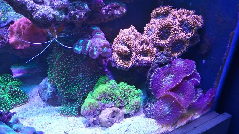 karlito's reef 3  - Page 20 Dsc_2613