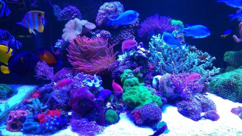karlito's reef 3  - Page 20 Dsc_2614