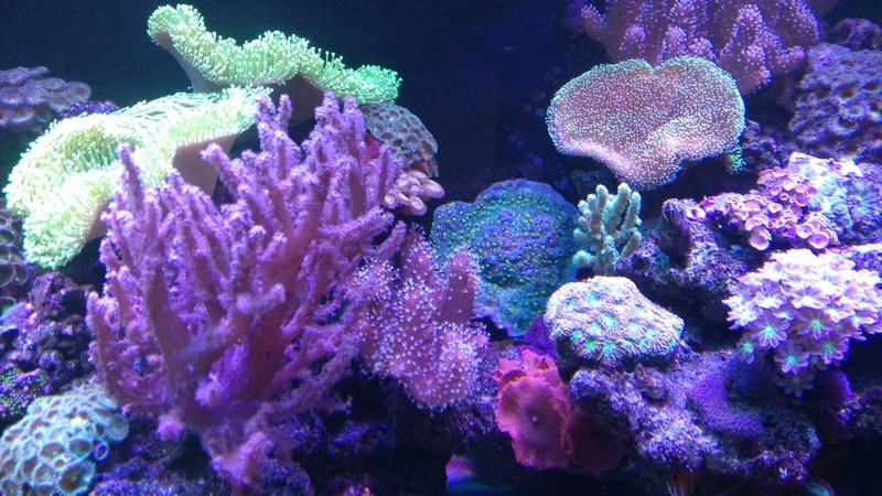 karlito's reef 3  - Page 20 Dsc_2615