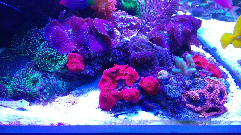 karlito's reef 3  - Page 20 Dsc_2618