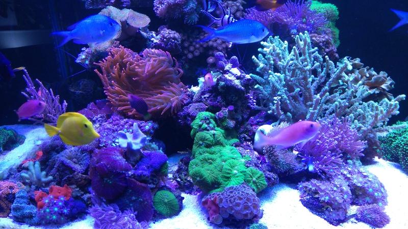 karlito's reef 3  - Page 20 Dsc_2619