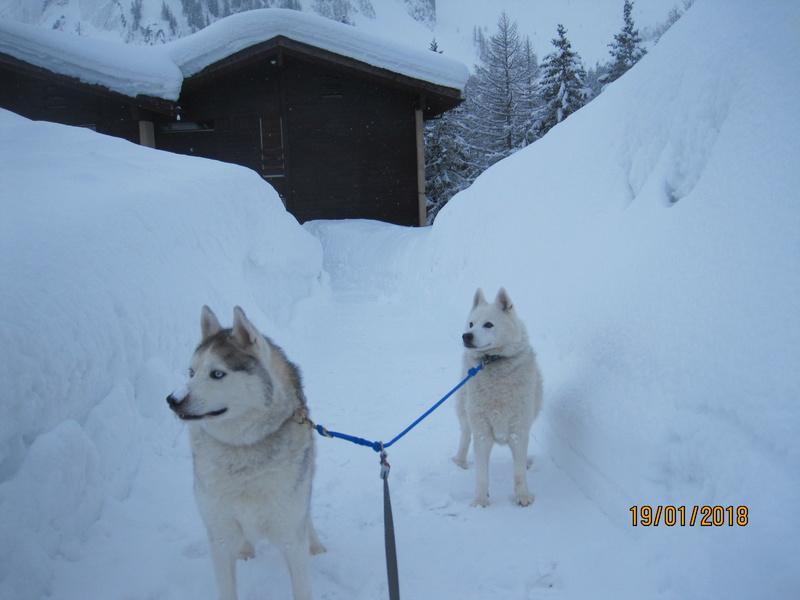 Saskia, Jiro, et leurs copains - Page 10 2010