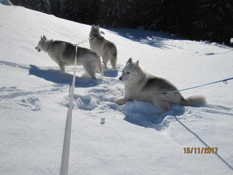 Saskia, Jiro, et leurs copains - Page 3 211