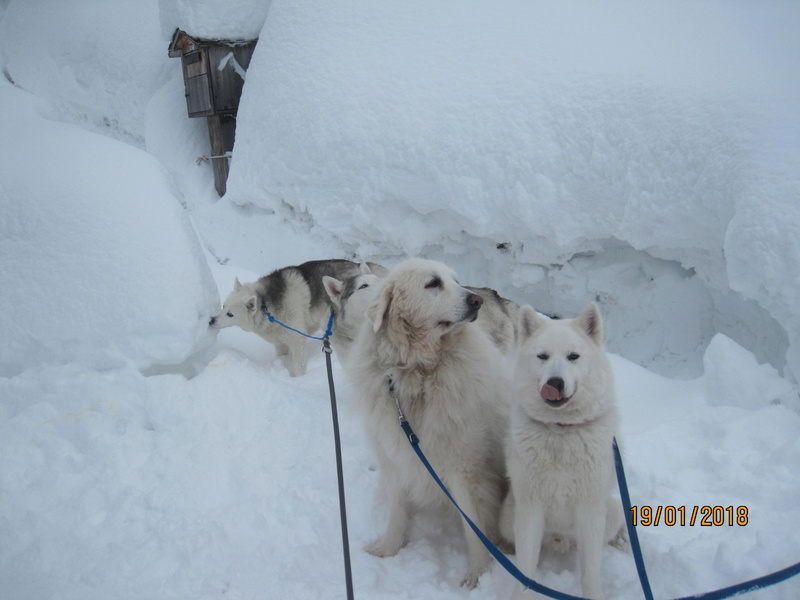 Saskia, Jiro, et leurs copains - Page 10 712