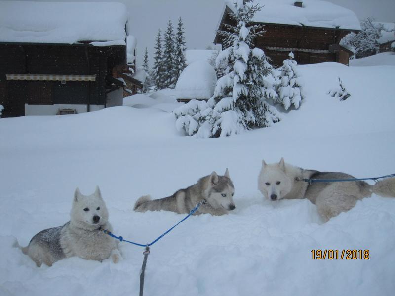 Saskia, Jiro, et leurs copains - Page 10 912