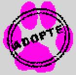 JUDE, jeune chienne Malamute, ASSO EDEN VALLEY Adopte10