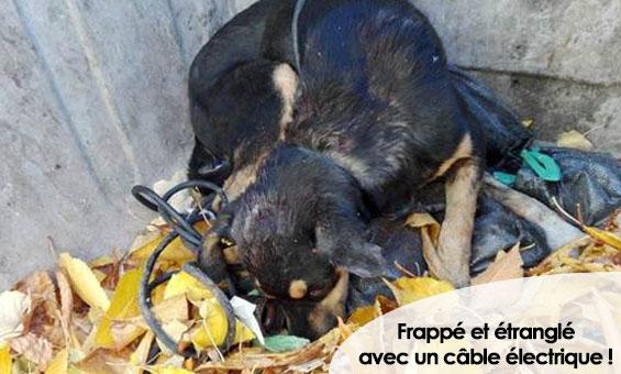un petit  clic pour les animaux - Page 40 34e0c510