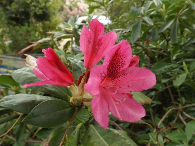 explosion florale - Page 3 Dscf5618