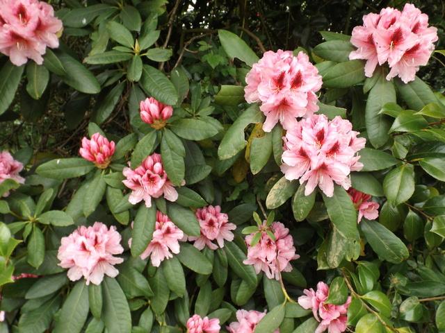 explosion florale - Page 3 Dscf5619