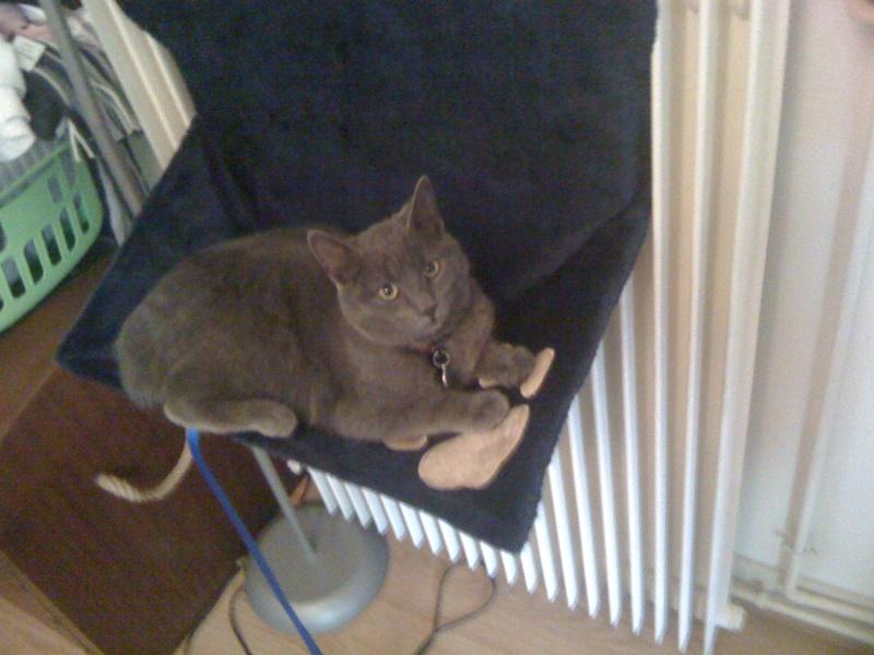 8 août : Journée internarionale du chat — le chat dans toute sa beauté - Page 3 Iphone11