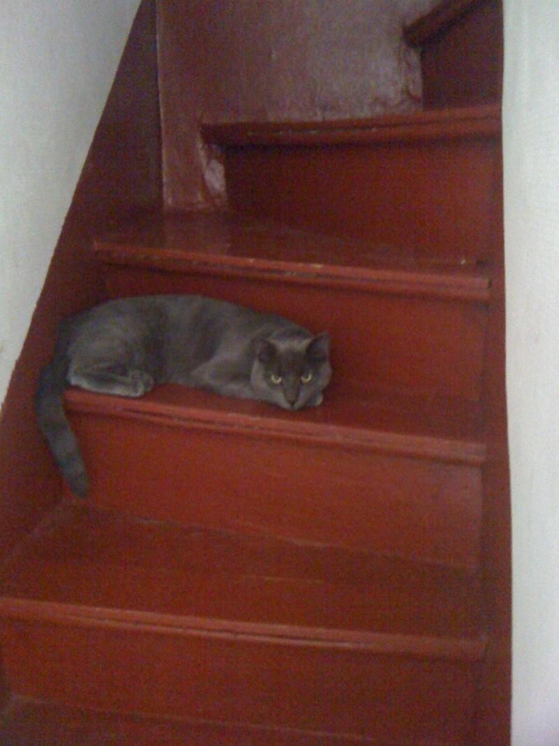 8 août : Journée internarionale du chat — le chat dans toute sa beauté - Page 3 Iphone12
