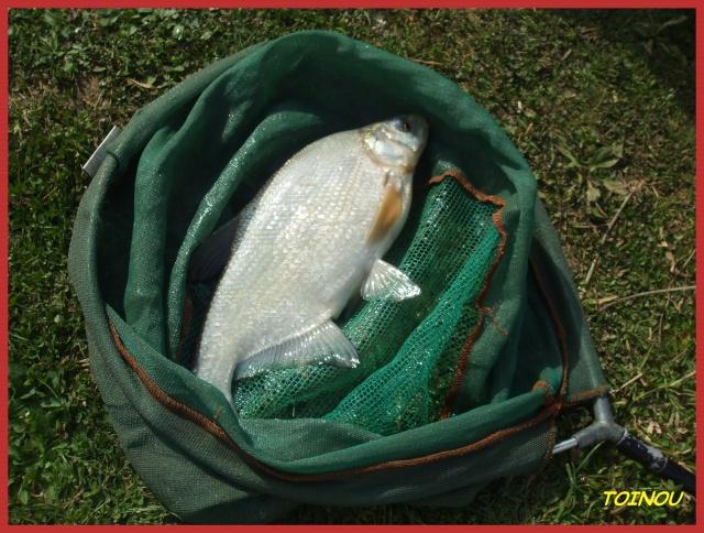 pêche de la brème 01912