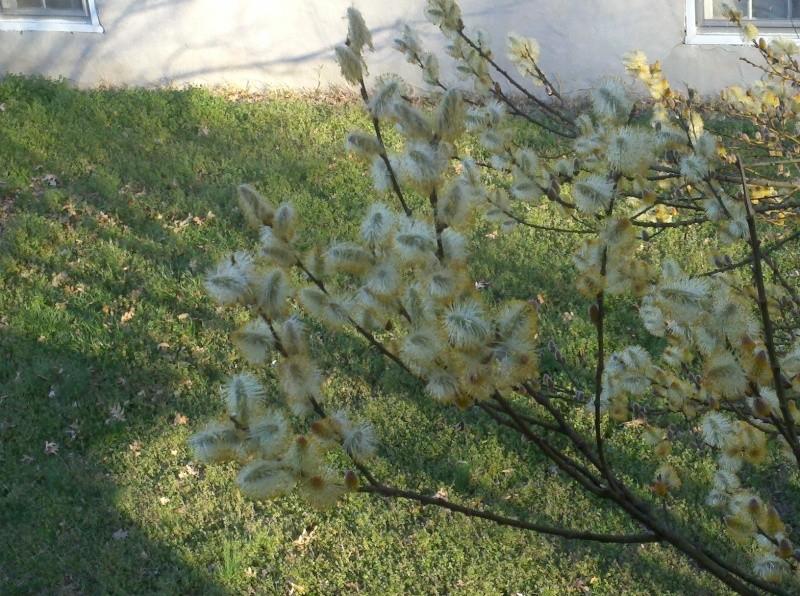 Shannon's Gardening Thread [2011-2013] 2011-015