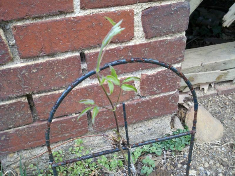 Shannon's Gardening Thread [2011-2013] 2011-016