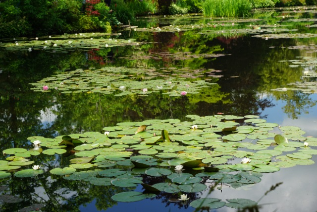 Visite de Giverny Nymphy13