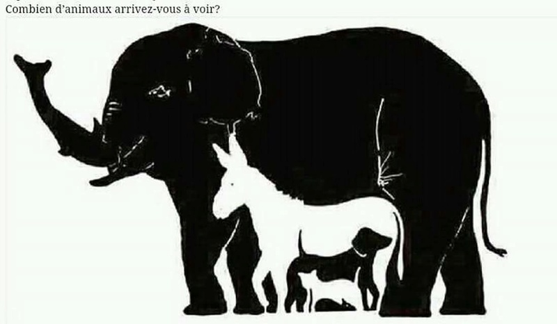 Combien d'animaux ? Fb_img17
