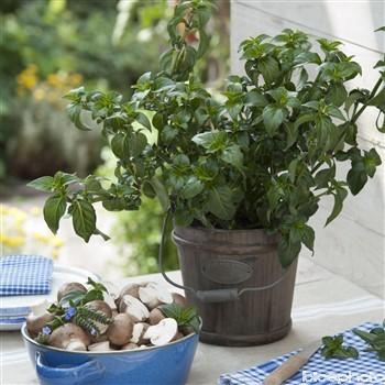Plante champignon 58871110