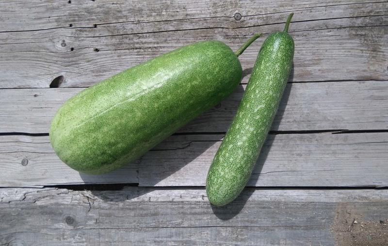 Melon d'hiver chinois Melon-10