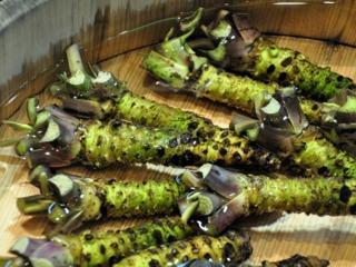 Le wasabi Wasabi10