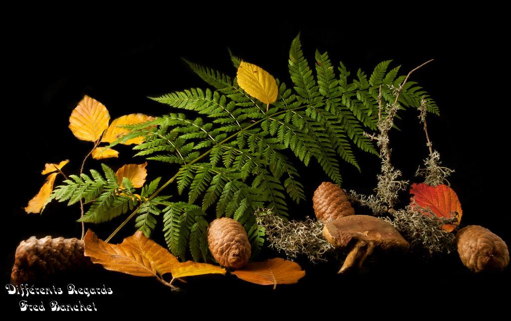l'automne Pa179310