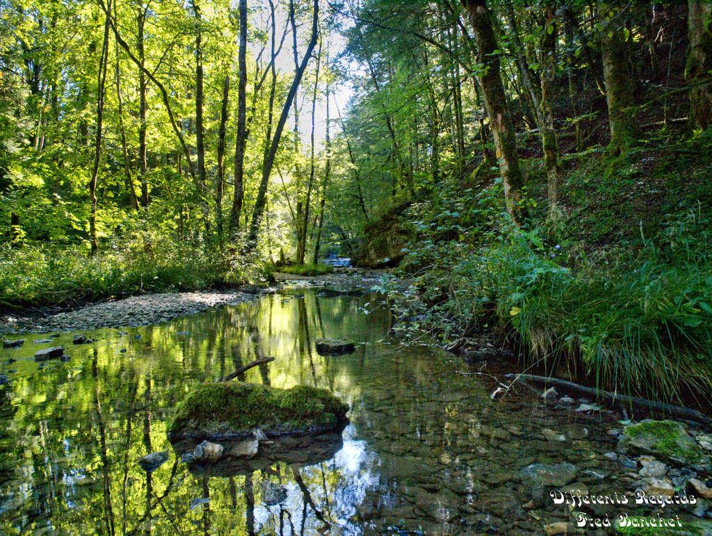 ruisseau dans la forêt Ruisse11