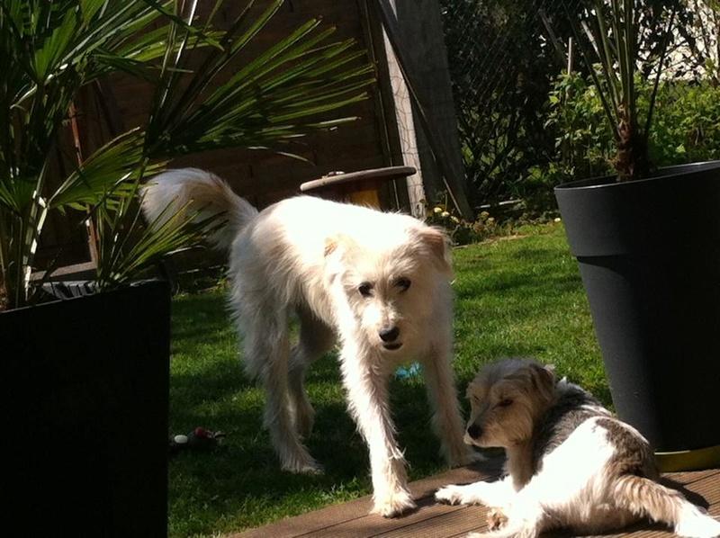 LAGOON - chien mâle croisé labrit né en 2015 (Alina) - adopté par Michel et Martine (67) - Page 2 13179410