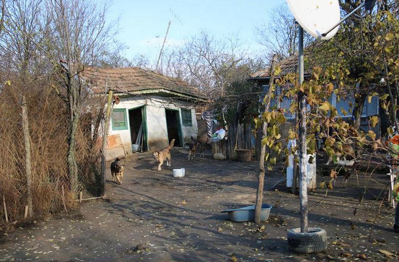 Refuge de Camélia - à proximité de Bucarest 154