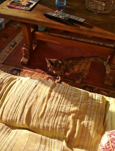 CHIPIE, femelle née en Avril 2018 - France - En FA chez Maud (depart59) 157