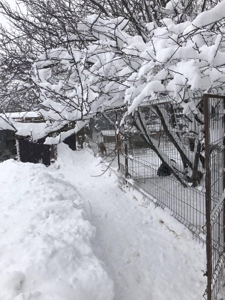 Refuge de Carmina - à proximité de Bucarest 245