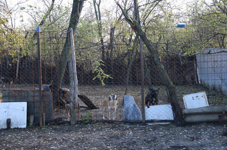 Refuge de Camélia - à proximité de Bucarest 247