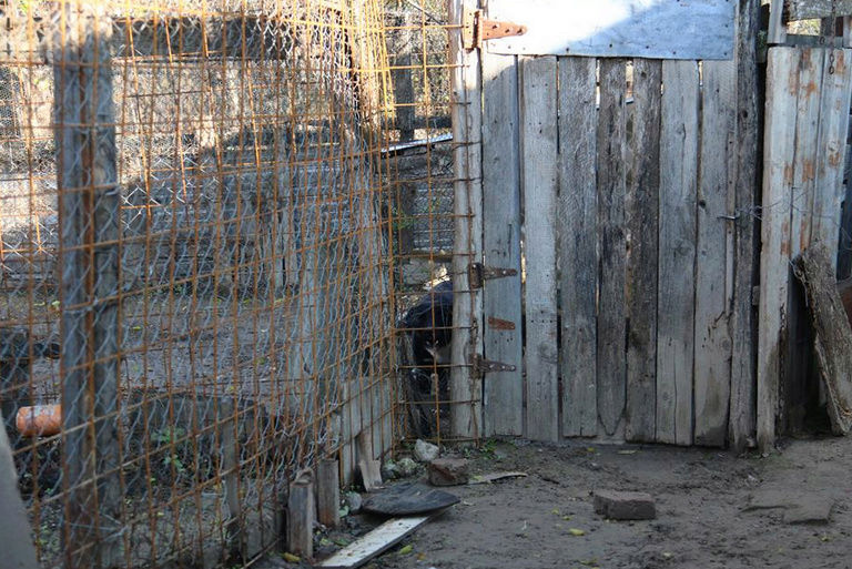 Refuge de Camélia - à proximité de Bucarest 537