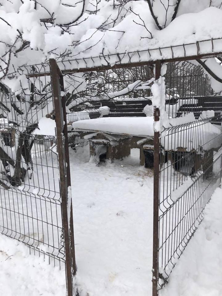 Refuge de Carmina - à proximité de Bucarest 635