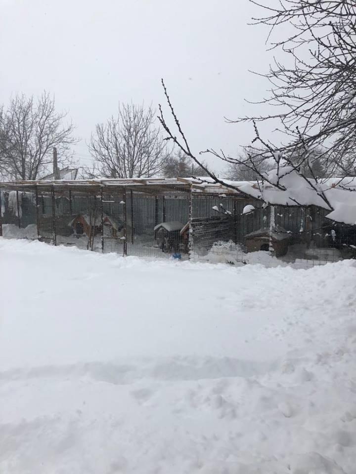 Refuge de Carmina - à proximité de Bucarest 726