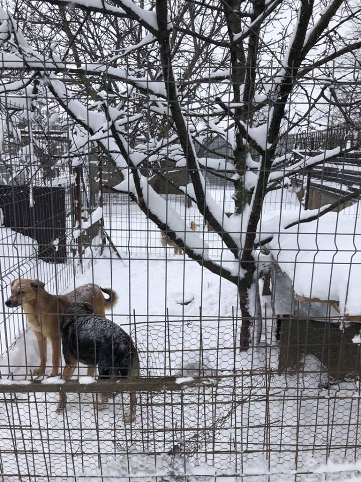 Refuge de Carmina - à proximité de Bucarest 913