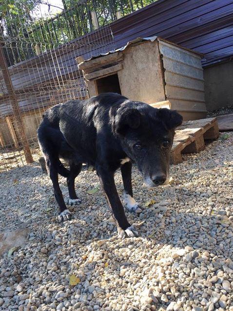 ALICE (ex BOUNTY) - femelle croisée de taille petite, née environ en mars 2007 - CARMINA BUCAREST . Adoptée par Isabelle (depart75)- décédée  Bounty10