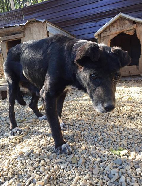 ALICE (ex BOUNTY) - femelle croisée de taille petite, née environ en mars 2007 - CARMINA BUCAREST . Adoptée par Isabelle (depart75)- décédée  Bounty11