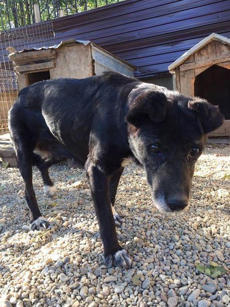 ALICE (ex BOUNTY) - femelle croisée de taille petite, née environ en mars 2007 - CARMINA BUCAREST . Adoptée par Isabelle (depart75)- décédée  Bounty12