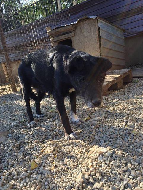 ALICE (ex BOUNTY) - femelle croisée de taille petite, née environ en mars 2007 - CARMINA BUCAREST . Adoptée par Isabelle (depart75)- décédée  Bounty13