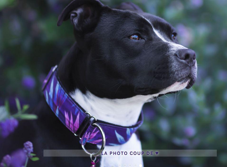 Nouveau partenaire : PeeweePaw - accessoires pour animaux Captur10